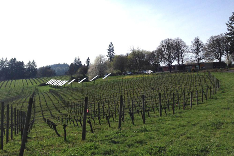 Oregon wine sails to another warm, trouble-free vintage and wonders, What's up with that?