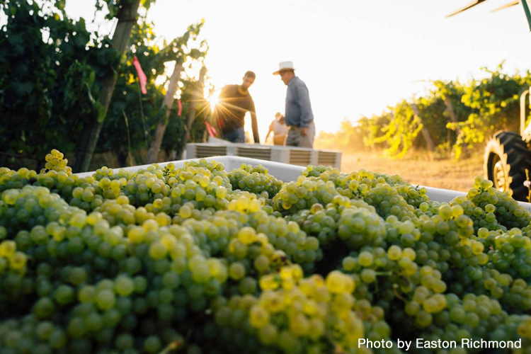 Oregon Winemakers Who Are Making Chardonnay Cool Again