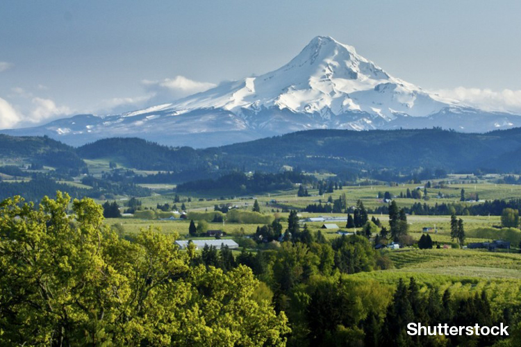 Pacific Northwest Wines Offer Something Different For Adventurous